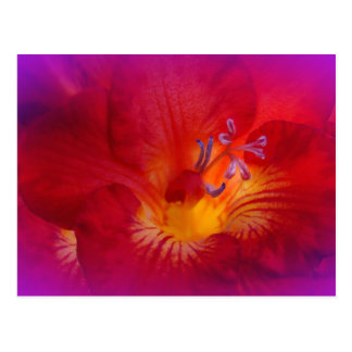 Red Freesia Flower Items Postcard