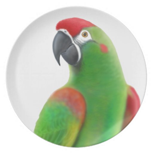 Red Fronted Macaw Parrot Plate