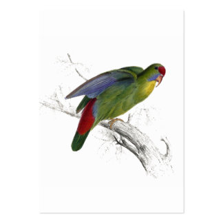 Red-Fronted Parrakeet Large Business Card