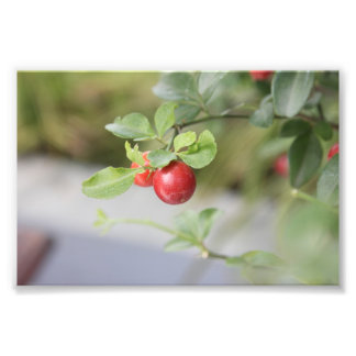 Red Fruity Photo