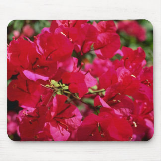 Red Fuchsia blossoms, El Yunque Rainforest, Puerto Mousepad