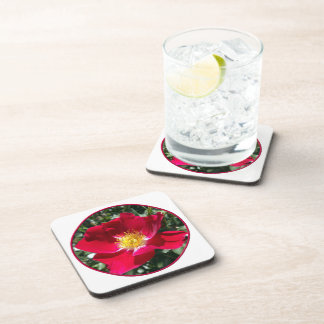 Red / Fuchsia rose Beverage Coaster