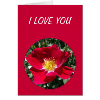 Red / Fuchsia rose Card