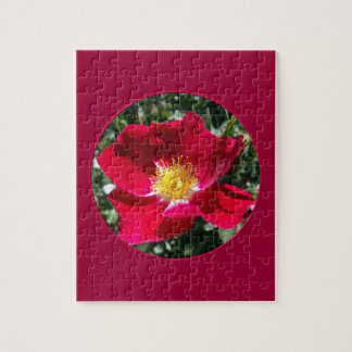 Red / Fuchsia rose Jigsaw Puzzle