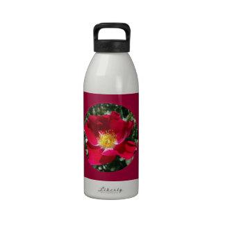 Red / Fuchsia rose Water Bottles