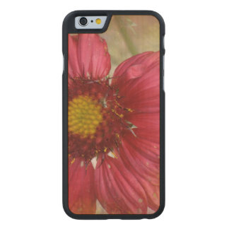 Red Gaillardia Carved® Maple iPhone 6 Slim Case