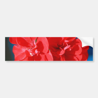 Red garden flowers car bumper sticker