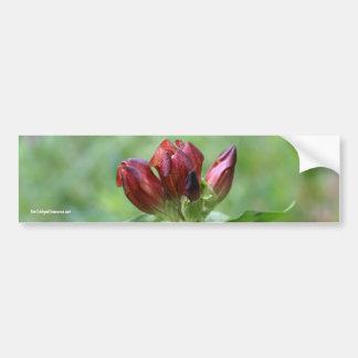Red Gentian Flower Photo Bumper Sticker Car Bumper Sticker