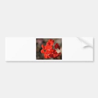 Red Geranium Flower Bumper Stickers