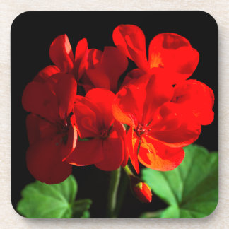 Red geranium flower drink coaster