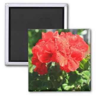 Red Geranium Flower Magnet