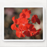 Red Geranium Flower Mouse Pads