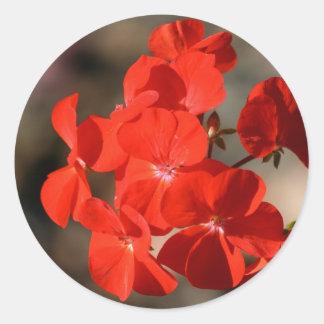 Red Geranium Flower Classic Round Sticker