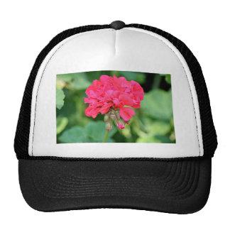 Red Geranium flowers in bloom 2 Trucker Hat