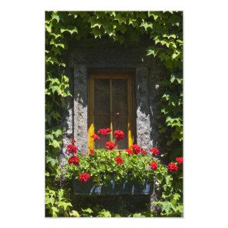 Red Geranium Flowers Window Box Photo Print