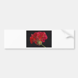Red Geranium In Progress 2 Bumper Sticker
