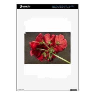 Red Geranium In Progress iPad 3 Decal