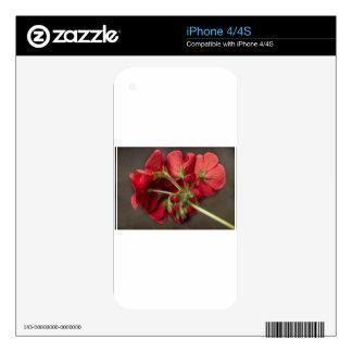 Red Geranium In Progress iPhone 4 Decals