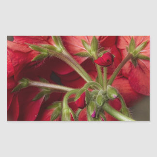 Red Geranium In Progress Rectangular Sticker