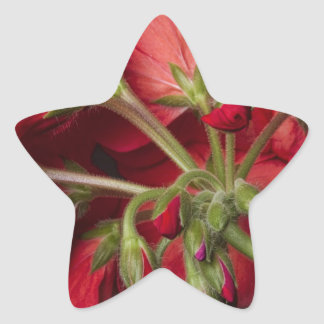 Red Geranium In Progress Star Sticker
