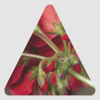 Red Geranium In Progress Triangle Sticker