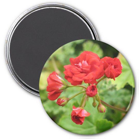 Red Geranium Magnet