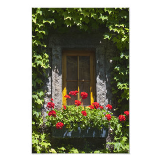 Red Geranium Window Box Photography Print Photo