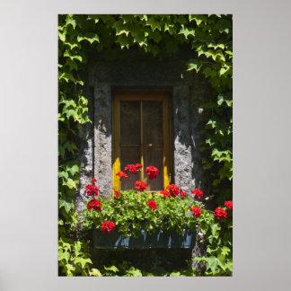 Red Geranium Window Box Poster