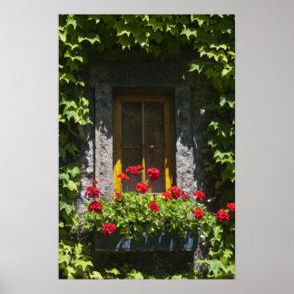 Red Geranium Window Flower Box Poster