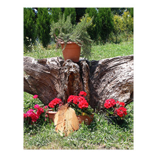 Red geraniums and tree root, El Camino, Spain Letterhead