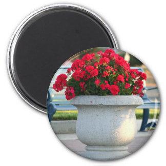 Red geraniums magnet