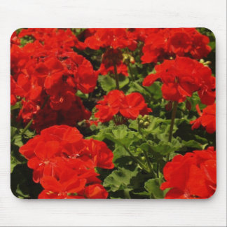 Red Geraniums Mouse Pad