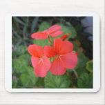 Red Geraniums Mousepads