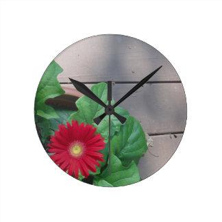 Red Gerber Daisy flower Round Wallclock
