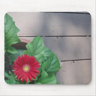 Red Gerber Daisy flower Mousepad