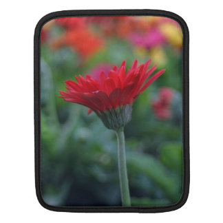 Red gerber daisy flower photography ipad sleeves