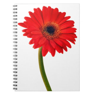 Red  Gerber Daisy Flowers Floral Daisies Flower Notebook