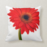 Red  Gerber Daisy Flowers Floral Daisies Flower Pillows