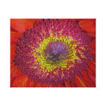 Red Gerber Daisy Gallery Wrapped Canvas