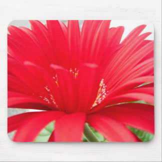 red gerber daisy: mouse pads
