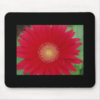 red gerber daisy mousepads