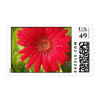 Red Gerber Daisy Postage Stamp