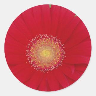 red gerber daisy round sticker