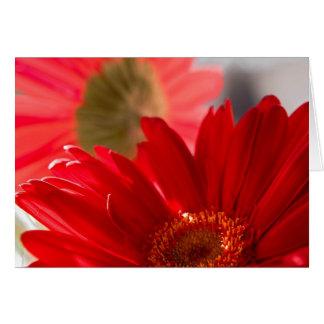 Red Gerbera Daisy #40 Card