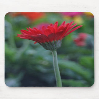 Red gerbera daisy flower mousepad fun floral gifts