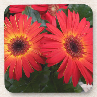 Red Gerbera Daisy Flowers Beverage Coaster