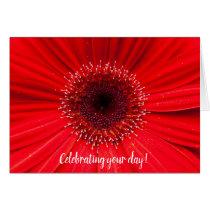 Red Gerbera Daisy for birthday Card