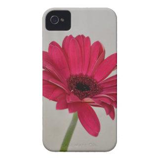Red Gerbera Daisy iPhone4 Case