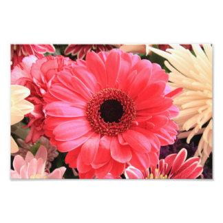 Red Gerbera Daisy Photographic Print