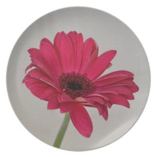 Red Gerbera Daisy Plate